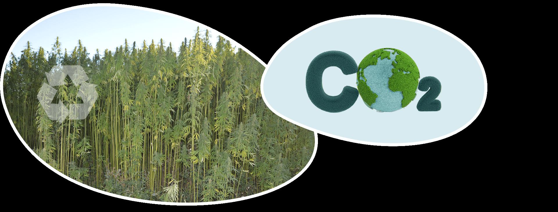 www-kanapiu-biokompozitas